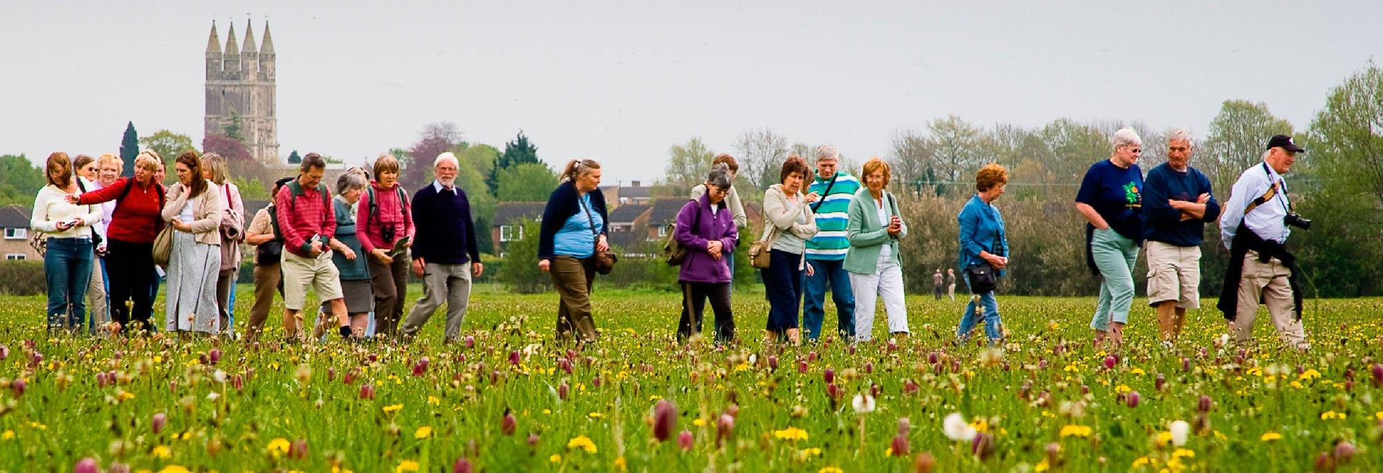 The Fritillaries Are Approaching Peak Flowering