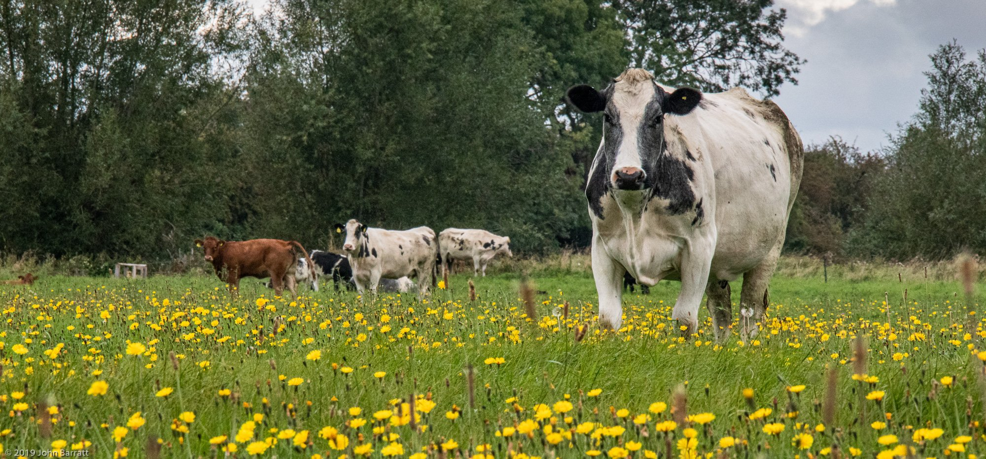 Conservation Grazing Vital for Biodiversity