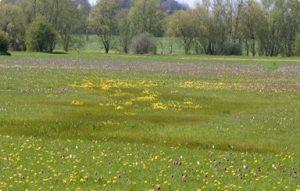 North Meadow Communities