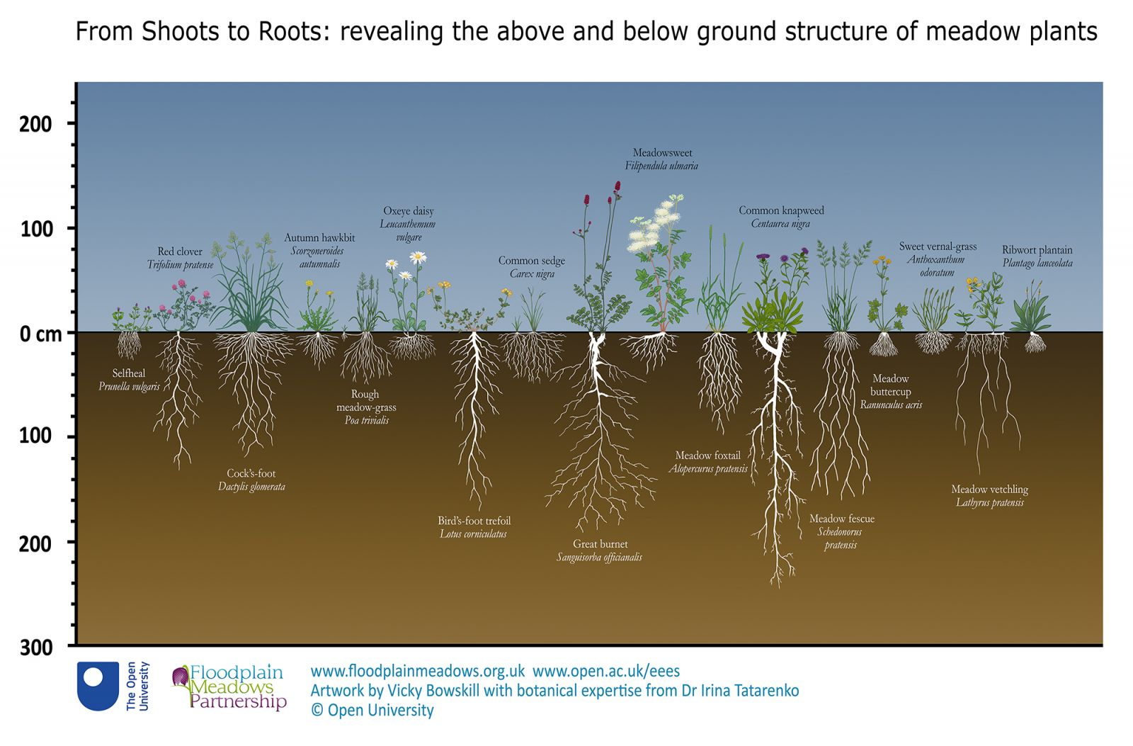 From Shoots to Roots: revealing the above and below ground structure of meadow plants